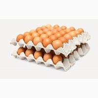 Яйца инкубационное куриные Город Домодедово