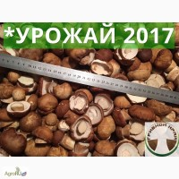 ОПТ белый гриб 2017