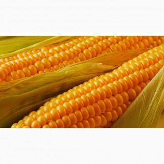 Гибриды семена кукурузы П7709, П8400, ПР37Н01, ПР39Д81, ПР39Ф58, ПР39Х32