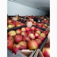 Яблоки оптом, калибр 65+, оптом от производителя, 71 руб./кг