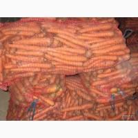 Морковь от 20 тонн