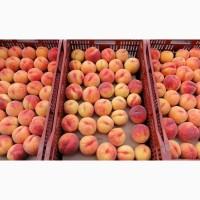 Продажа оптом персиков с доставкой по России