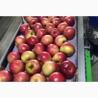 Яблоки Беш Юлдуз готовы к оптовой продаже с доставкой
