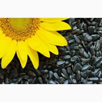 Семена подсолнечника РАЖТ (РФ, имп)