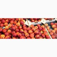 Лысый персик нектарин Октябрьский оптом с доставкой прямо к вашему порогу