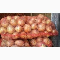 Купим томаты, картофель, лук, чеснок, яблоки от 20 тонн партия