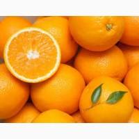 Апельсины ОПТОМ от импортера
