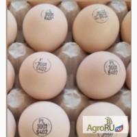 Продаю инкубационные яйца бройлеров Кобб 500, Росс 308