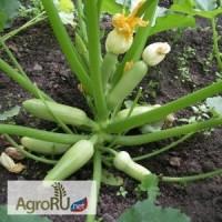 Семена кабачков Арал F1