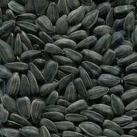 Семена Подсолнечника Крупноплодного «ДОБРЫНЯ»