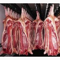 Свинина полутуши 1-я категория оптом
