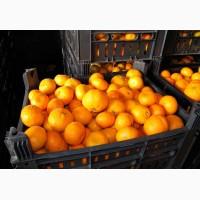 Продажа оптом сладких мандарин с доставкой