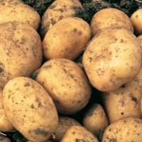 Отборный картофель отличного качества