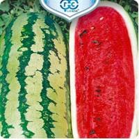 Семена арбуза. Сорт «Волжанин»