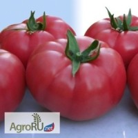 Розарио F1, семена томата, 100 шт. (Гавриш)