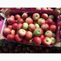 Дискавери, яблоки от производителя