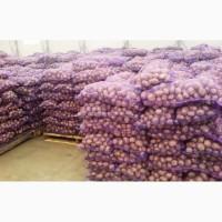 Картофель оптом от 20 тонн 5+ от производителя от 5.5 руб/кг