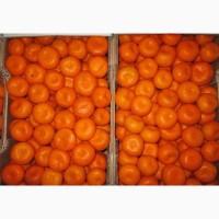 Сладкие мандарины оптом с доставкой прямо к вашему порогу