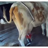 Антибрык для коров (Германия)