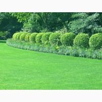 Продаем газонные травосмеси