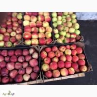 Продам яблоки польских сортов