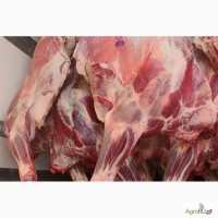 Закупаем говядину Бык полу-туши охлажденная