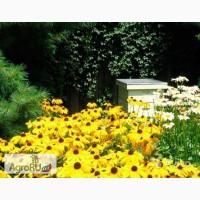 Пчелопакеты кавказской породы пчел. Весна 2017г