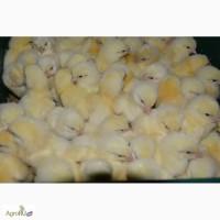 Оптово розничная продажа птиц и яйца