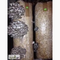 Субстратные грибные блоки вешенки