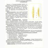 Семена Озимой пшеницы Станичная