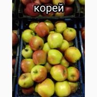 Яблоки оптом от ростовского производителя