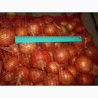 Овощи Лук оптом 5