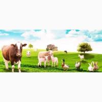 Комбикорм для с/х животных и птицы от производителя