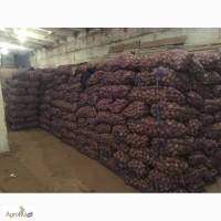 Картофель семенной оптом от производителя различных сортов, 11 р/кг