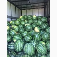 Арбузы от производителя 12 р./кг