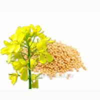 Семена горчицы Люкс