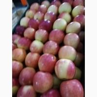 Яблоки оптом от КФХ
