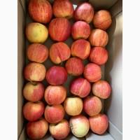 Продаем яблоки первых сортов