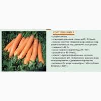 Семена моркови столовой, сорт Лявониха (белорусская селекция)