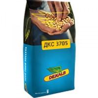 Семена кукурузы ДКС (Монсанто)