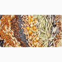 Куплю зерно, семена, шрот