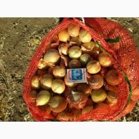 Мелкий репчатый лук от производителя, урожай 2018 Волгоград, Волгоградская обл