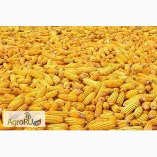 Поставим кукурузу 3, 4 класса
