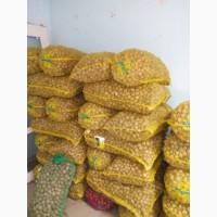 Продам грецкий орех в скорлупе