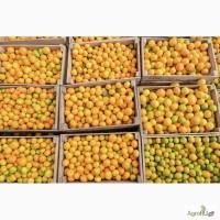 Продаем мандарины из Абхазии