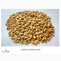 Пшеница ячмень кукуруза FOB