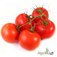 Продаю помидоры