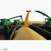 Фуражный овес, ячмень, пшеница и кукуруза. с доставкой