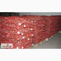 Картофель оптом от 19 р/кг