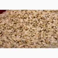 Кубанский рис оптом от завода-производителя по низкой цене